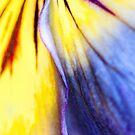 Heartsease Flowing by Marilyn Cornwell