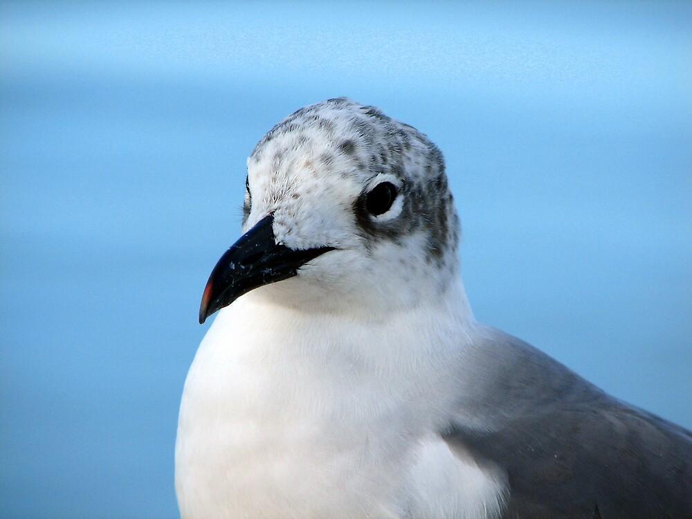 Sea Gull by Deborah Stewart