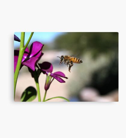 Bee Canvas Print