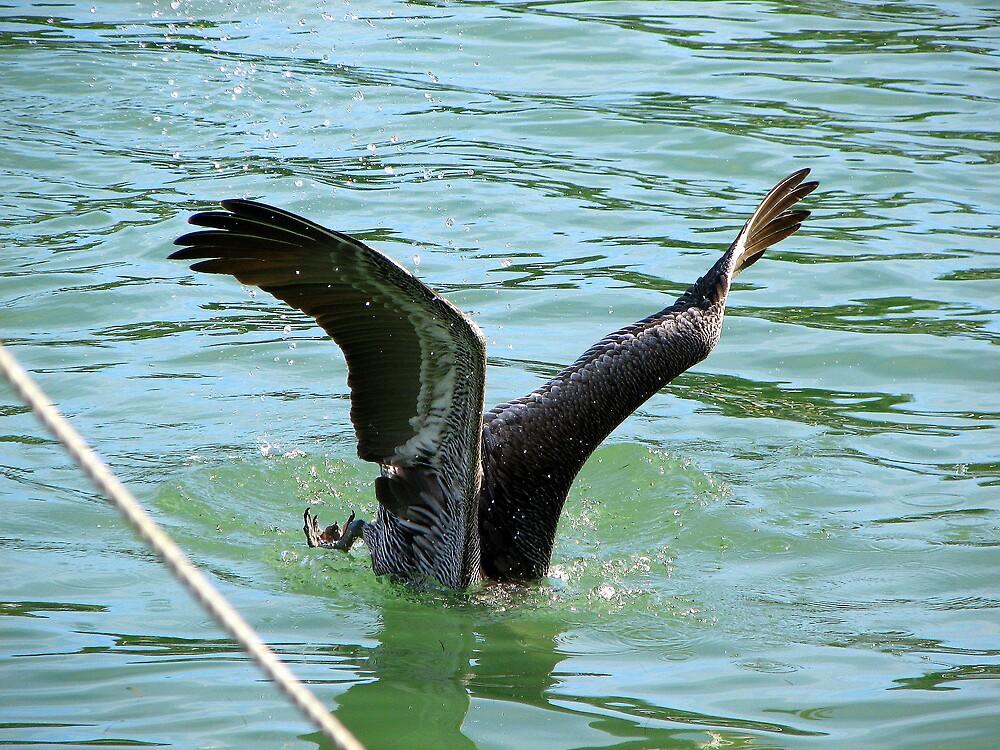 Pelican Diving for a Fish by Deborah Stewart