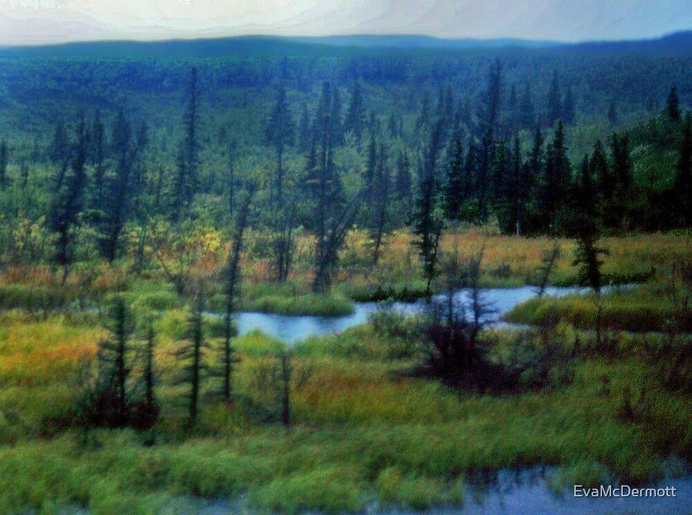 Drunken Forest by EvaMcDermott