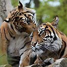 Tigers showing affection by gabriellaksz