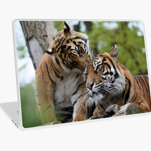 Tigers showing affection Laptop Skin