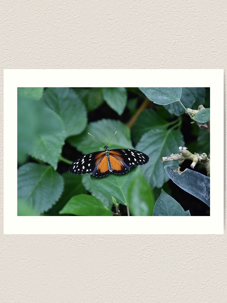 Alternate view of Tiger longwing butterfly Art Print