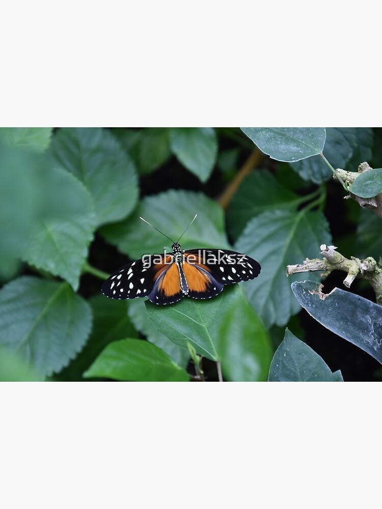 Tiger longwing butterfly by gabriellaksz