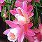 *Avatar/Cactus Flower - Enchanted FLowers*