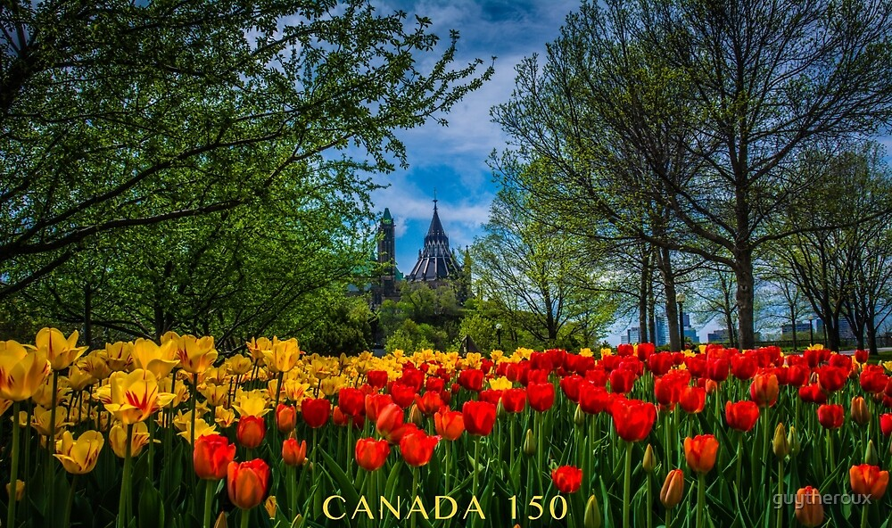 Tulip Festival des Tulipes 2 by guytheroux