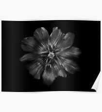 Backyard Flowers In Black And White 22 Poster