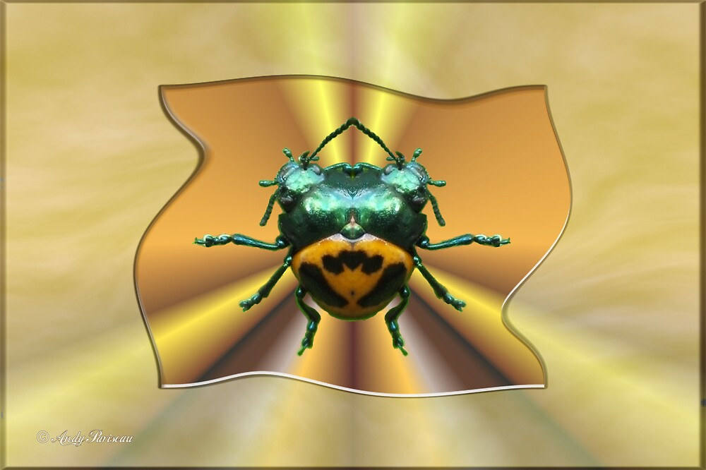 Milkweed Beetle by Andy2302