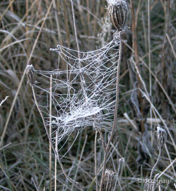 Frosty Spider Web by shotzbyjay
