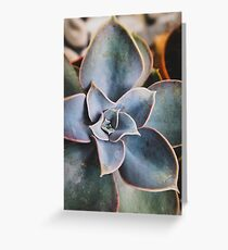 close up of succulent Greeting Card