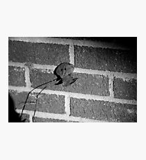 Back to the Wall Photographic Print