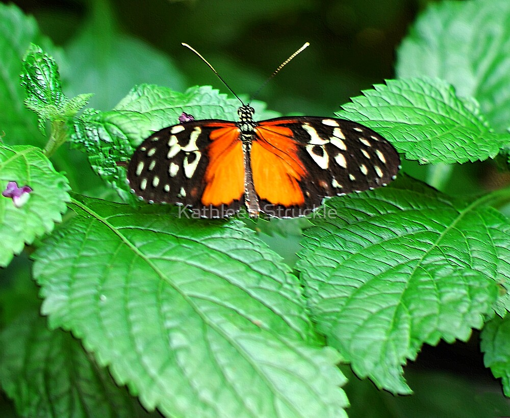 Butterfly On Leaves by Kathleen Struckle