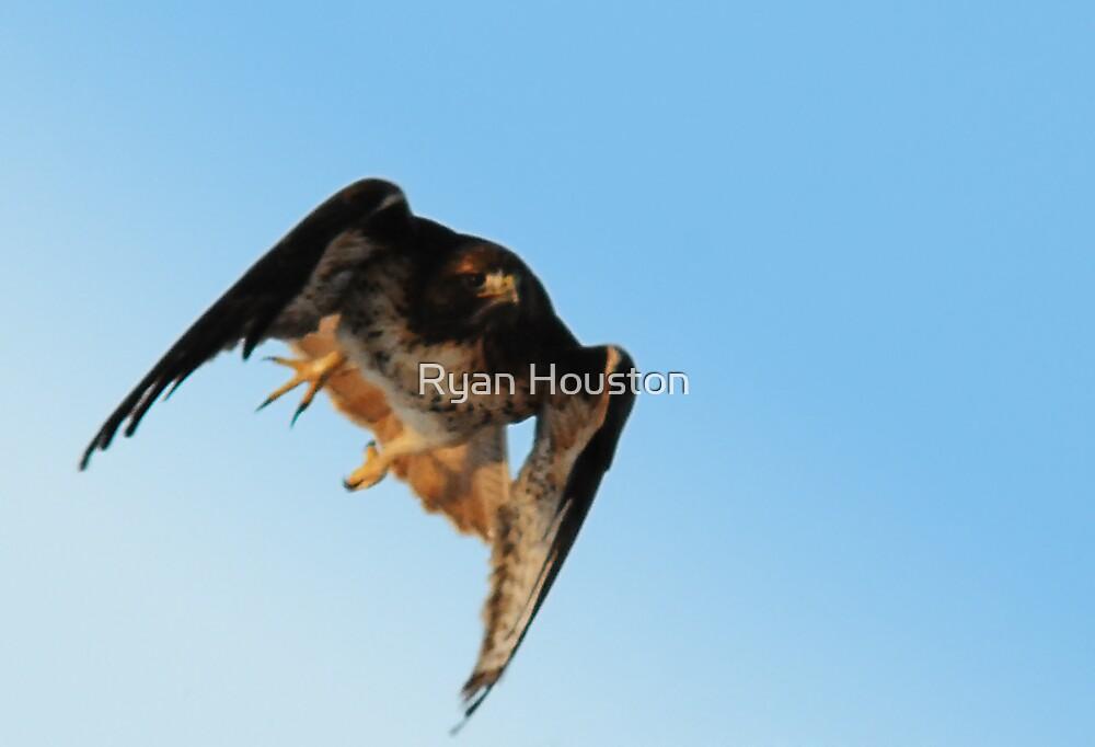 Red-tailed Hawk in Flight by Ryan Houston