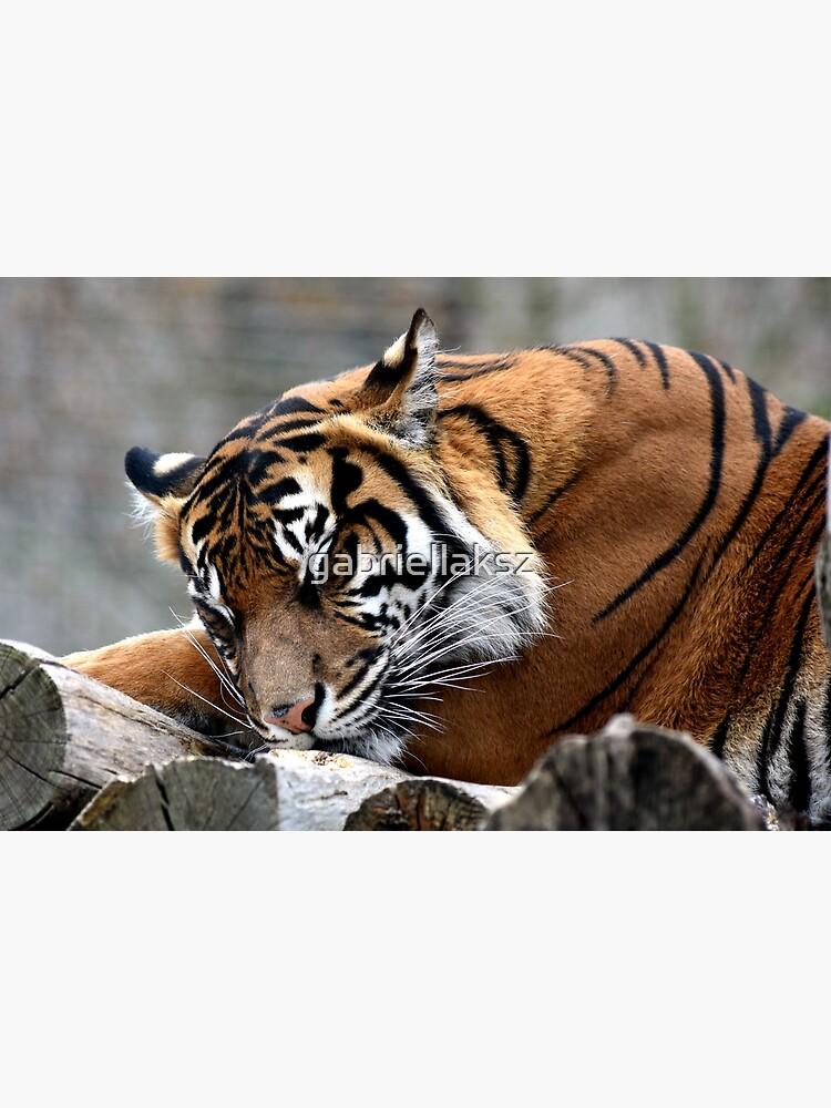 Sleeping tiger by gabriellaksz