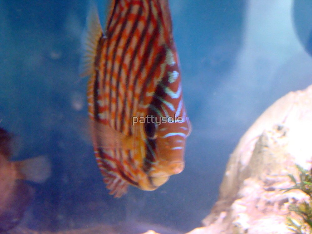 Discus Dave by pattysole