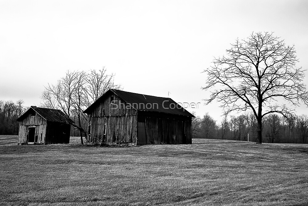 The Farm by Shannon Beauford