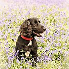 Bluebells and spaniel by JEZ22