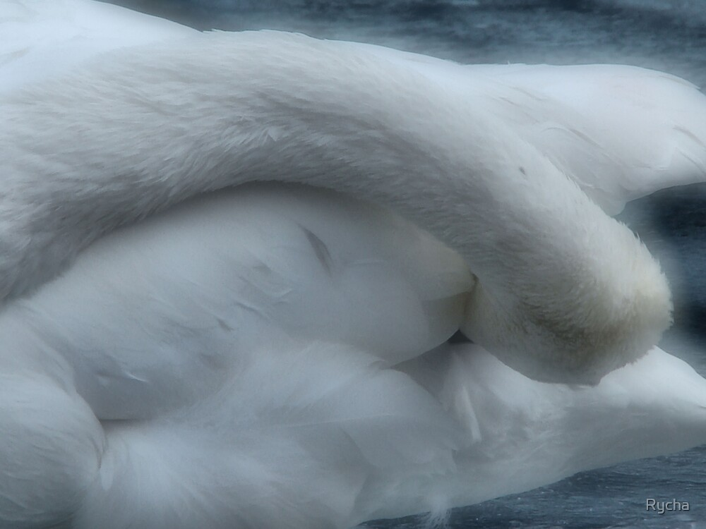 Different angle of the Swan by Rycha
