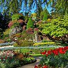 BUTCHART Gardens in Spring, by AnnDixon