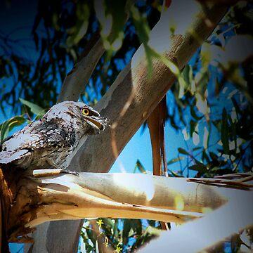 AUSTRALIAN TAWNY FROGMOUTH by hugo