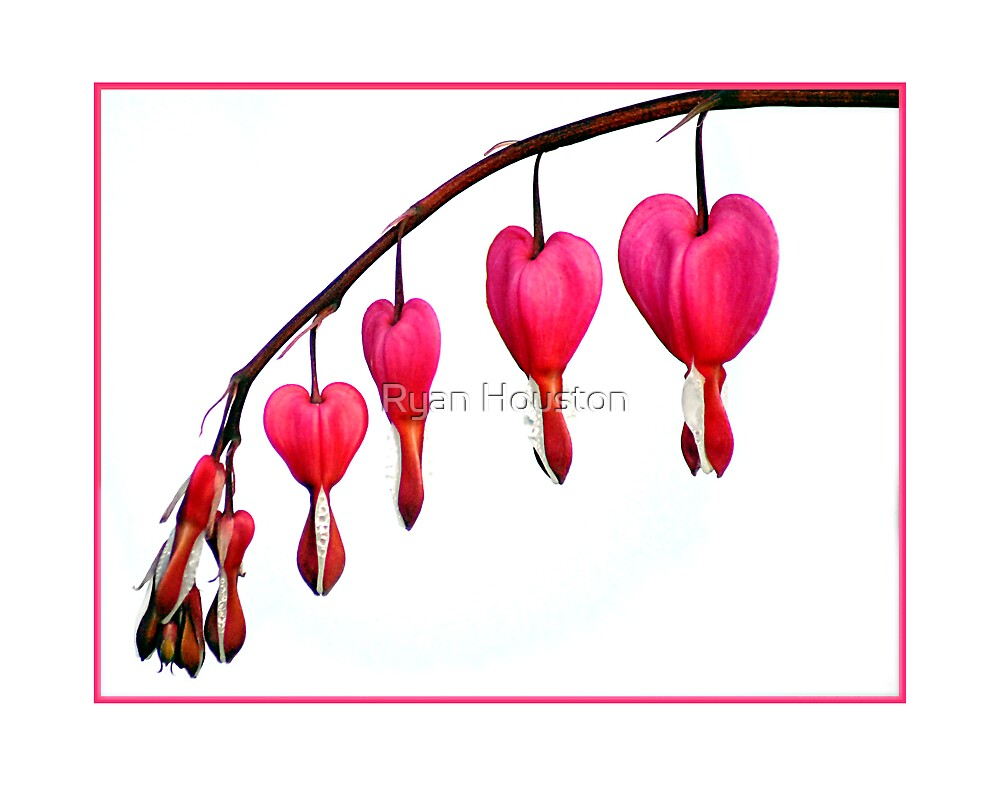 Bleeding Hearts by Ryan Houston