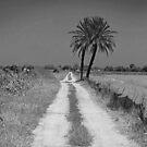 Plains path. by Paul Pasco