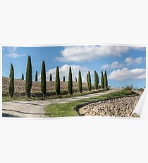 Tuscan Cypresses II Poster
