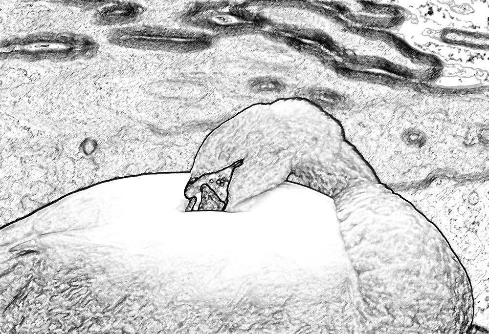 Sleeping Swan by kitlew