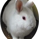 White Rabbit by KMorral