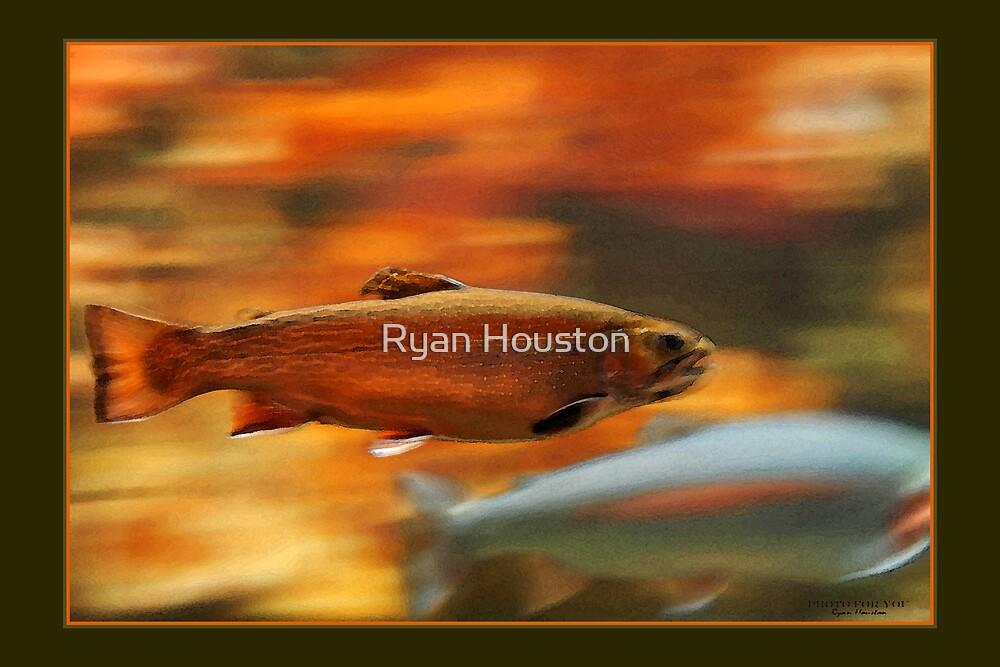 Brookie by Ryan Houston