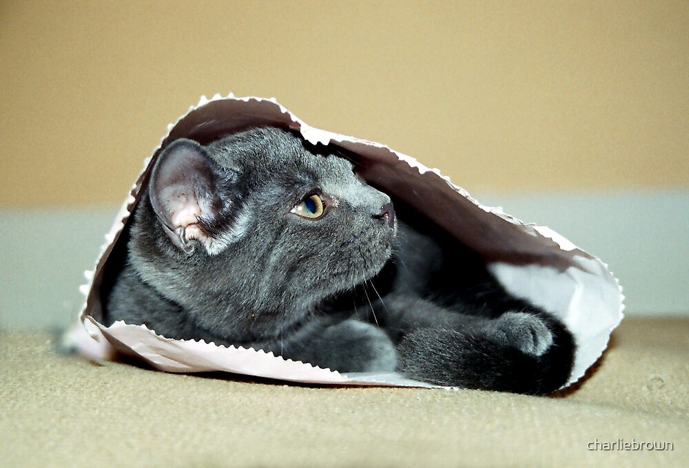 Don't let the cat out of the bag... by charliebrown