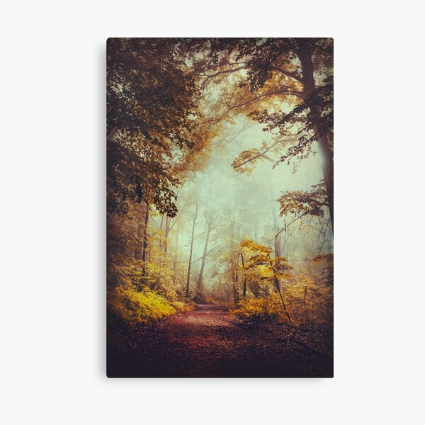 silent forest Canvas Print