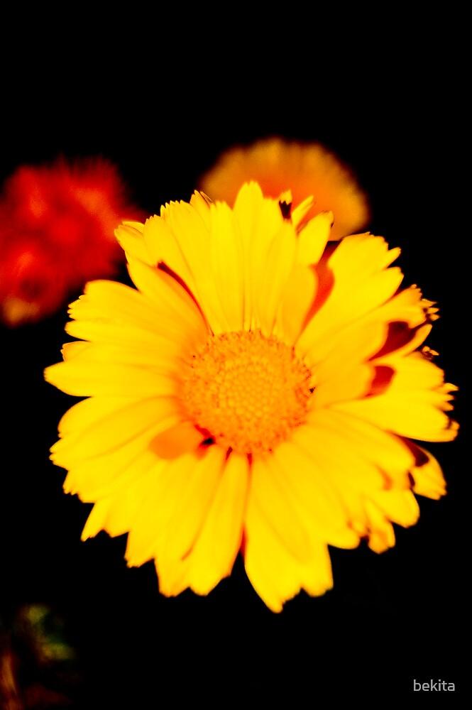 Like sunshine.... by bekita