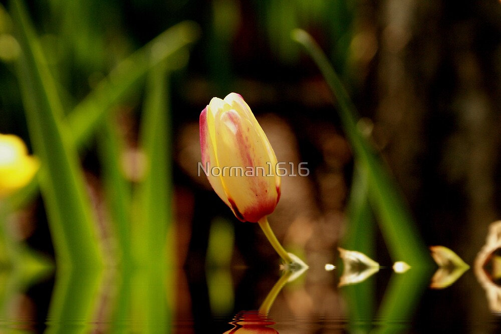 Reflections by Norman1616