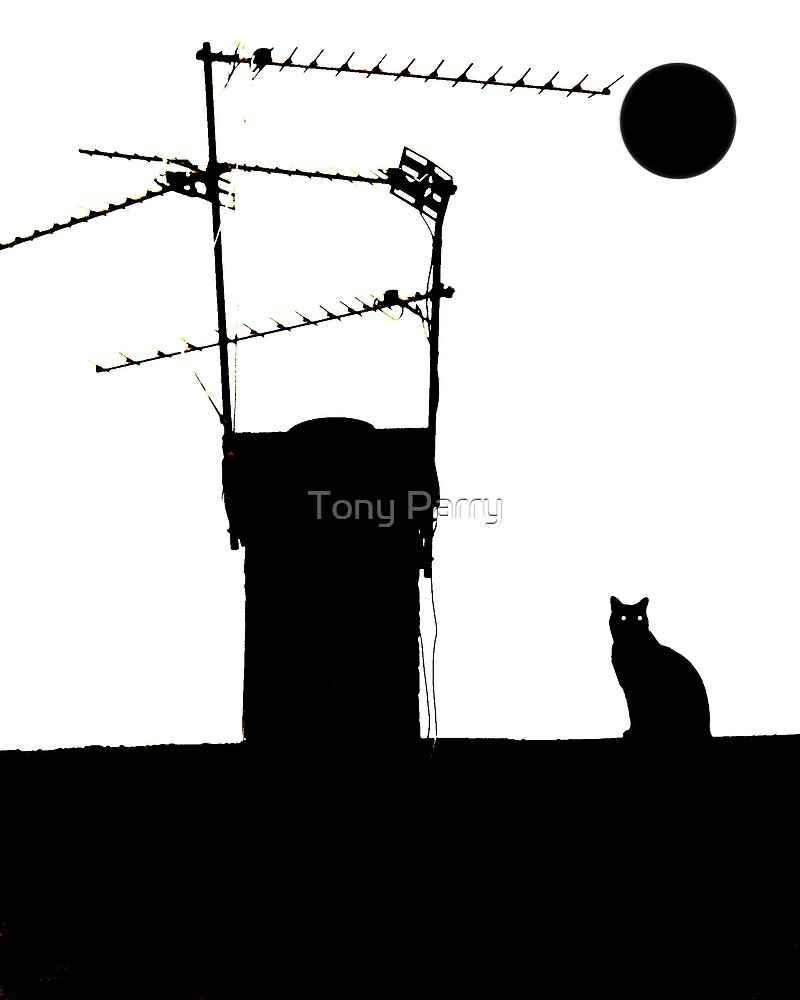 A NIGHT ON THE TILES by Tony Parry