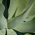 succulent by etccdb