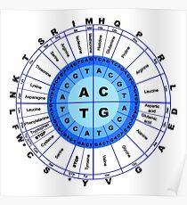 DNA, Genetic Code, Circle, Gene, Codon, Amino Acid. Poster