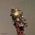 Ants on the peach tree by Warren Taylor
