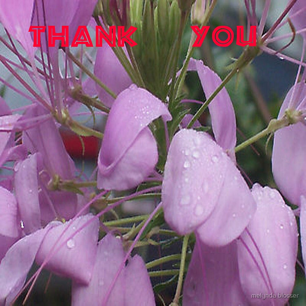 thank you cards by melynda blosser
