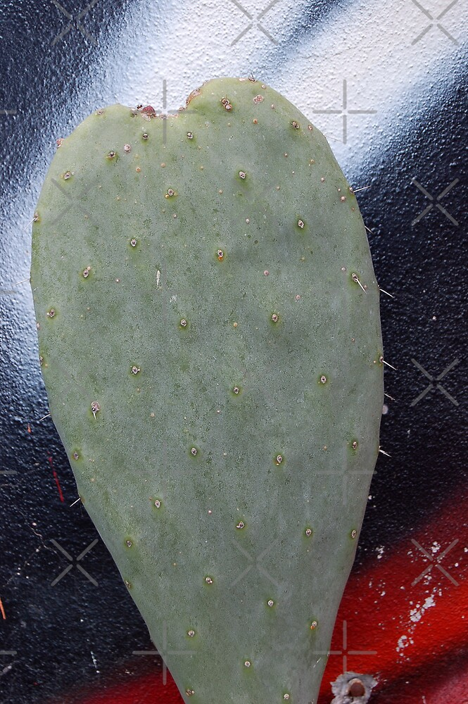 Cactus in love by monica palermo