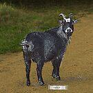 Hattie Goat by Hank Stallings