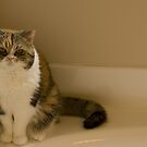 Grumpy Gracie by Hank Stallings