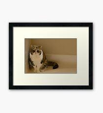 Grumpy Gracie Framed Print
