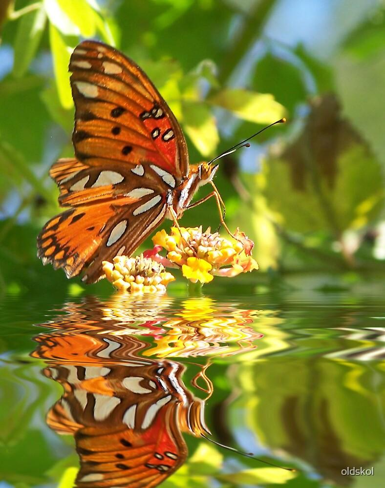 Butterfly reflection by oldskol