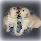 Gorgeous Four Week Old Golden Retriever Puppies. by vette