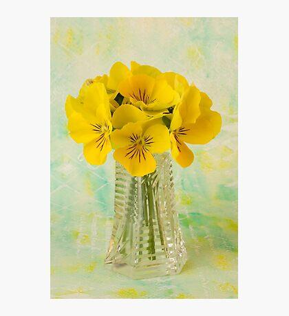 Yellow Pansies In Vase  Photographic Print