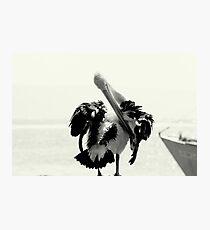 Pelican Portrait In Black And White Photographic Print