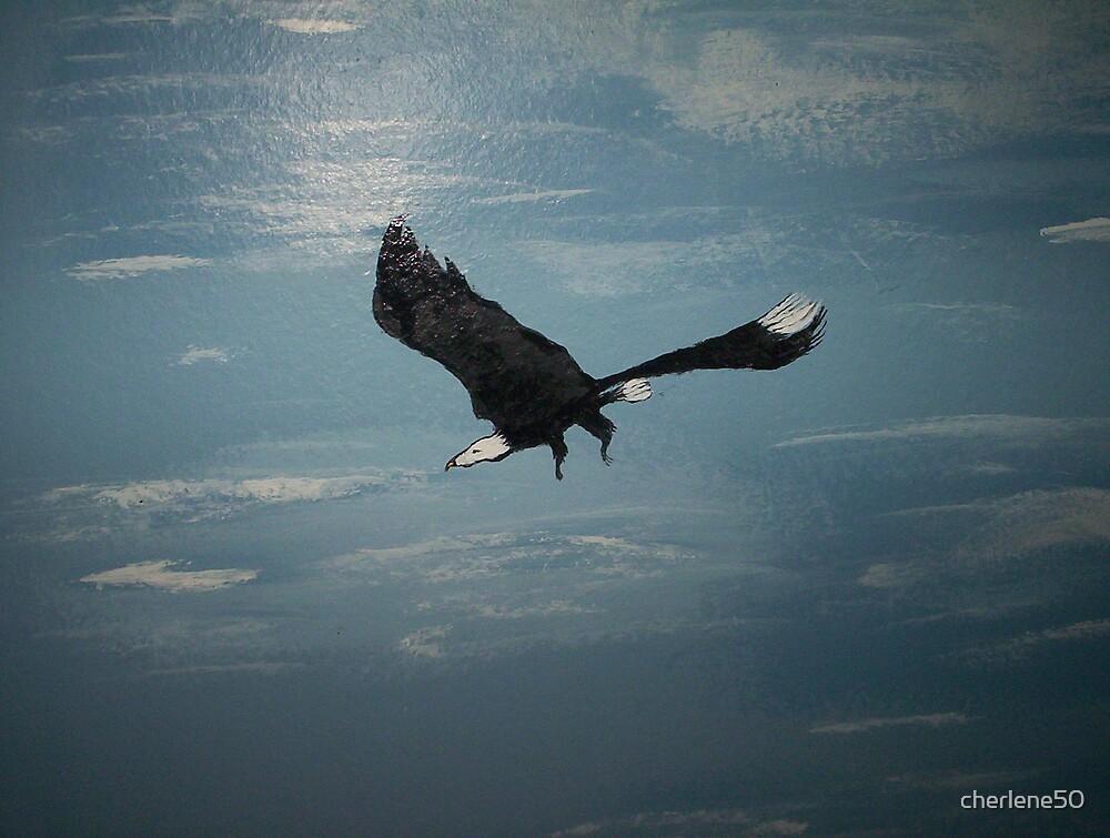 eagle soaring.... by cherlene50