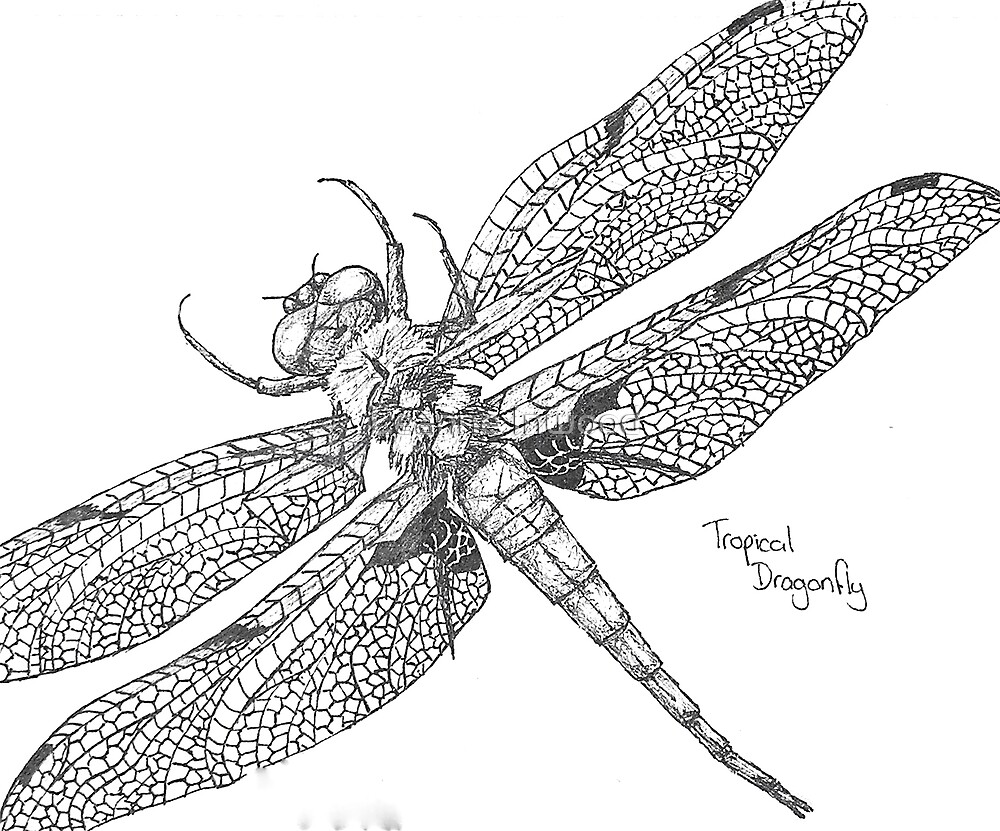 tropical dragonfly by Leanne Inwood
